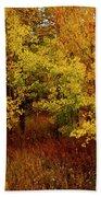 Autumn Palette Beach Towel by Carol Cavalaris