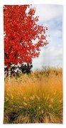 Autumn Red Maple Beach Towel