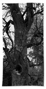 Autumn Spook In Black And White Beach Towel