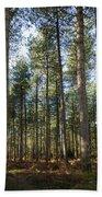 Autumn Tranquil Forest Beach Sheet