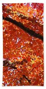 Autumn Tree Art Prints Orange Red Leaves Baslee Troutman Beach Towel