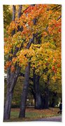 Autumn Trees In Park Beach Towel
