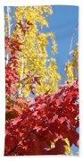 Autumn Trees Red Yellow Fall Tree Blue Sky Landsape Beach Sheet