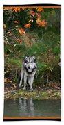 Autumn Wolf Study  Beach Towel
