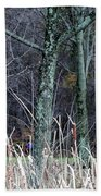 Autumn Woods Beach Towel