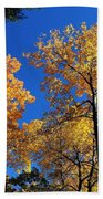 Autumn Yellow Foliage On Tall Trees Against A Blue Sky In Palermo Beach Towel