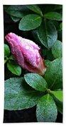Awakening - Flower Bud In The Rain Beach Towel