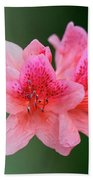 Azalea Blooms On A Green Background Beach Towel