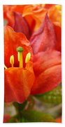 Azalea Flowers Art Prints Azaleas Gilcee Art Prints Baslee Troutman Beach Towel