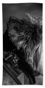 B And W Dog Beach Towel