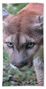 Babcock Wilderness Ranch - Oceola The Panther On The Prowl Beach Towel