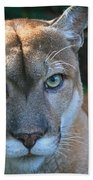 Babcock Wilderness Ranch - Oceola The Panther Pleasantly Peering Beach Towel