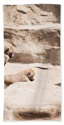 Baboons Monkeys Having Sex Beach Towel