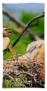 Baby Anhinga Chicks Beach Towel