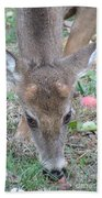 Baby Backyard Button Buck Beach Towel