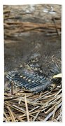 Baby Birds Beach Towel