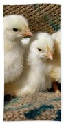 Baby Chicks Beach Towel