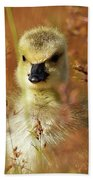 Baby Cuteness - Young Canada Goose Beach Sheet