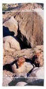 Baby Foxes Beach Towel