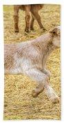 Baby Goat On The Run Beach Towel