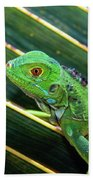 Baby Green Iguana Beach Towel