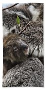 Baby Koala V2 Beach Towel