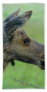 Baby Moose With Dew Beach Towel