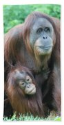 Baby Orangutan Clinging To His Mother Beach Towel