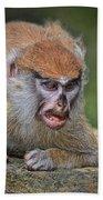 Baby Patas Monkey On Guard  Beach Towel
