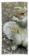 Baby Squirrel Beach Towel