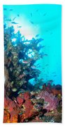 Backlit Coral Beach Towel