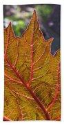 Backlit Leaf 2 Beach Towel