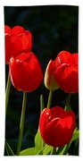 Backlit Red Tulips Beach Towel