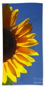 Backlit Sunflower Beach Towel