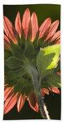 Backlit Sunflower  Beach Towel