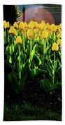 Backlit Tulips Beach Towel