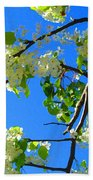 Backlit White Tree Blossoms Beach Towel