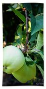 Backyard Garden Series - 2 Apples Beach Towel