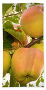 Backyard Garden Series - Apples In Apple Tree Beach Towel
