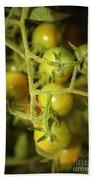 Backyard Garden Series - Green Cherry Tomatoes Beach Towel