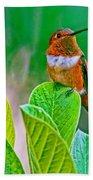 Backyard Hummingbird #22 Beach Towel