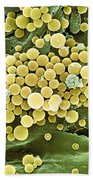 Bacteria On Hops Leaf, Sem Beach Towel