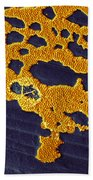 Bacterial Biofilm Beach Towel