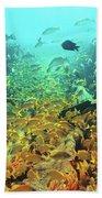 Bahamas Shipwreck Fish Beach Towel