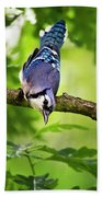 Balanced Blue Jay Beach Towel