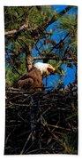 Bald Eagle In The Nest Beach Towel