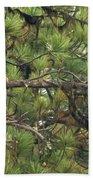 Bald Eagle In A Pine Tree, No. 4 Beach Towel