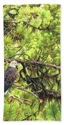 Bald Eagle In A Pine Tree, No. 5 Beach Towel
