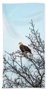 Bald Eagle In A Tree Enjoying The Sunlight Beach Towel