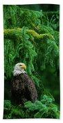 Bald Eagle In Temperate Rainforest Alaska Endangered Species Beach Towel